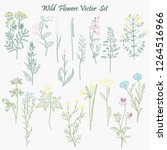hand drawn wild flowers and... | Shutterstock . vector #1264516966