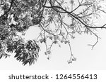 the branches of the tree have... | Shutterstock . vector #1264556413