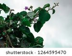 less vivid plant and flowers | Shutterstock . vector #1264595470
