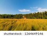 empty countryside landscape in... | Shutterstock . vector #1264649146