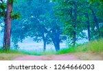 forest landscape at morning | Shutterstock . vector #1264666003