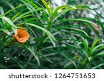beautiful flower and plant | Shutterstock . vector #1264751653