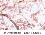 looking up  closeup  low angle...   Shutterstock . vector #1264753099