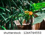 vivid green plants | Shutterstock . vector #1264764553