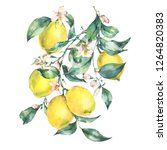 watercolor vintage greeting... | Shutterstock . vector #1264820383