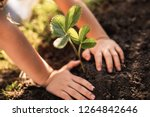 close up of child hands... | Shutterstock . vector #1264842646