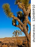 joshua tree in joshua tree... | Shutterstock . vector #126484910