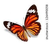 Monarch Butterfly Flying ...