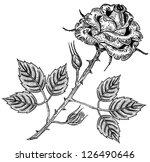 rose flower engraving | Shutterstock .eps vector #126490646