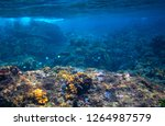 fishes and corals in tropical... | Shutterstock . vector #1264987579