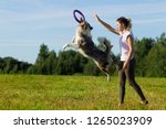 Stock photo border collie dog stroll plays jumps running around training field day summer the sun 1265023909