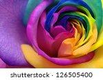 Macro Of Rainbow Rose Flower...