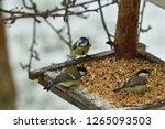 Bird Titmouse Feeding Millet...