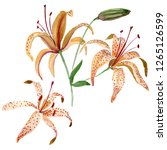 orange lilium floral botanical... | Shutterstock . vector #1265126599