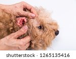 person showing red inflammed... | Shutterstock . vector #1265135416