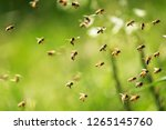 Swarm of bees in flight on a...