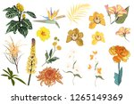 floral set. flower yellow ...   Shutterstock .eps vector #1265149369
