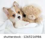 little welsh corgi pembroke... | Shutterstock . vector #1265216986