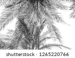 the leaves of the palm tree are ... | Shutterstock . vector #1265220766