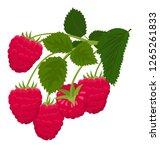 raspberry isolated on white... | Shutterstock .eps vector #1265261833