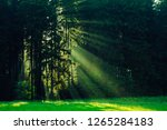 black forest in germany.... | Shutterstock . vector #1265284183