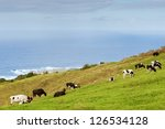 Cows on meadow over Atlantic ocean, Azores, Portugal - stock photo