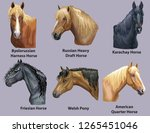 set of portraits of horses and... | Shutterstock .eps vector #1265451046