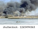 Controlled burn at Horicon Marsh National Wildlife Refuge in March 2015.  Geese on ice in forefront.