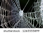 big old spider web | Shutterstock . vector #1265555899