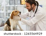 Stock photo young vet examining dog at veterinarian clinic daily examination of cute dog by brunet doctor in 1265564929