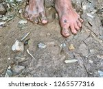 walking barefoot on natural... | Shutterstock . vector #1265577316