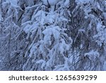 the first big snow at my home   Shutterstock . vector #1265639299