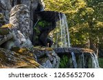 lante   italy   july 2015  the... | Shutterstock . vector #1265652706