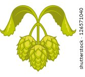 hops vector visual graphic icon ... | Shutterstock .eps vector #126571040