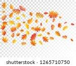 oak  maple  wild ash rowan... | Shutterstock .eps vector #1265710750