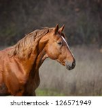 Stock photo horse closeup 126571949
