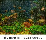 tropical freshwater aquarium.... | Shutterstock .eps vector #1265730676