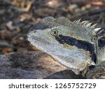 closeup of australian water... | Shutterstock . vector #1265752729