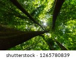 beautiful forest in the spring... | Shutterstock . vector #1265780839