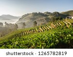 The Beautiful Landscape Of...
