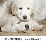 Stock photo puppies closeup 126581294