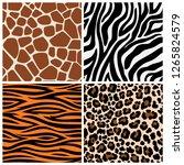 zebra  giraffe and leopard... | Shutterstock .eps vector #1265824579