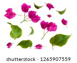 Set Of Bougainvillea Flowers...