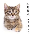 small brown kitten isolated on... | Shutterstock . vector #1265937796