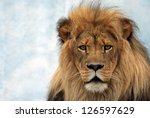 Stock photo male lion 126597629