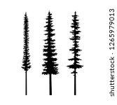 tree pine  coniferous nature... | Shutterstock .eps vector #1265979013