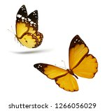 Stock photo two color flying isolated on white background 1266056029