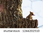 squirrel perched on tree  | Shutterstock . vector #1266202510