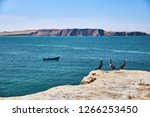 three sea birds on the cliffs... | Shutterstock . vector #1266253450