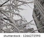 snow lies on the branches of... | Shutterstock . vector #1266272593